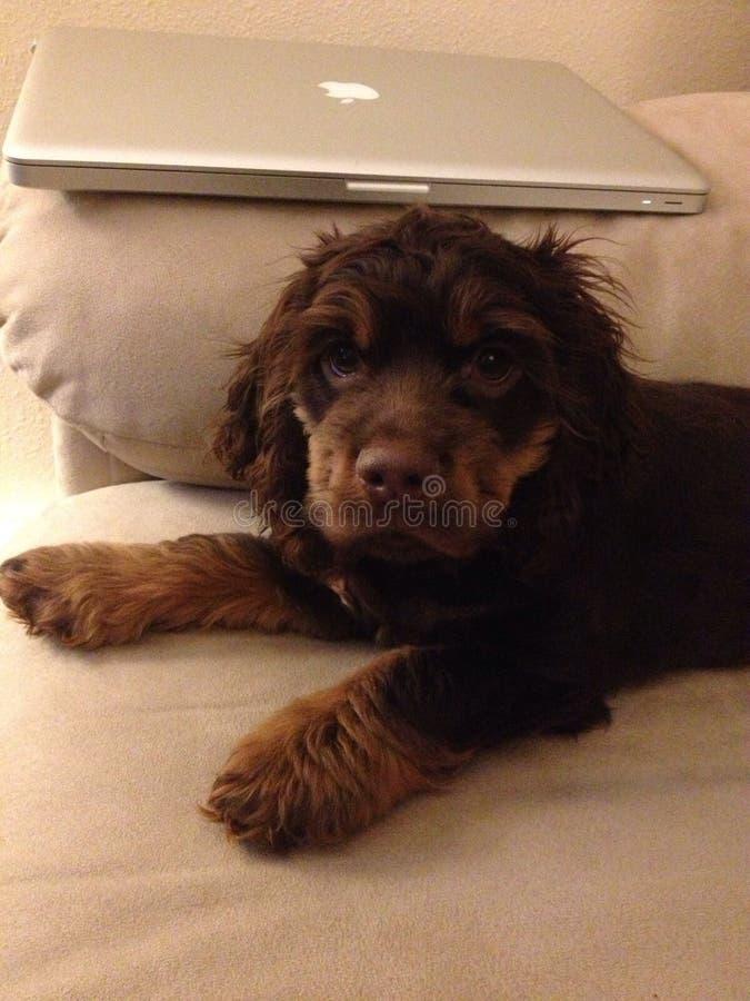 Mi bebé Bentley imagen de archivo libre de regalías