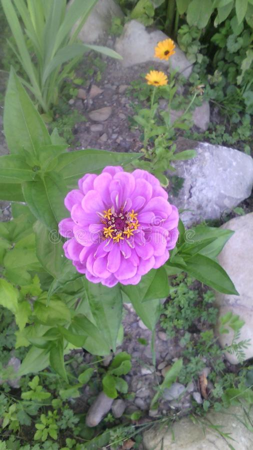 Mi flor imagen de archivo libre de regalías