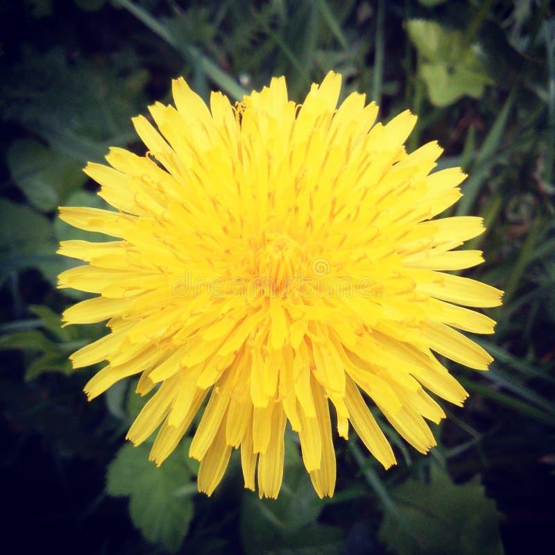 Mi flor fotografía de archivo