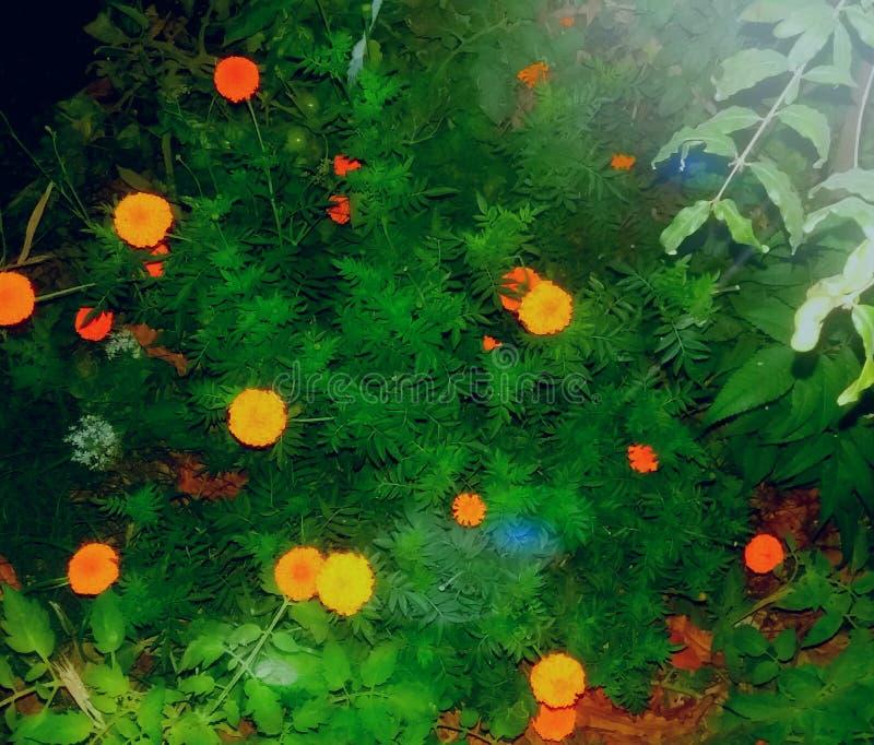 MI flor y plantas hermosas del jardín fotografía de archivo libre de regalías