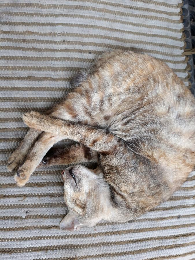 Mi gato fotos de archivo libres de regalías