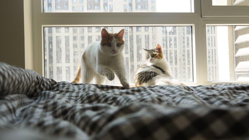 Mi gato del animal doméstico imagen de archivo libre de regalías