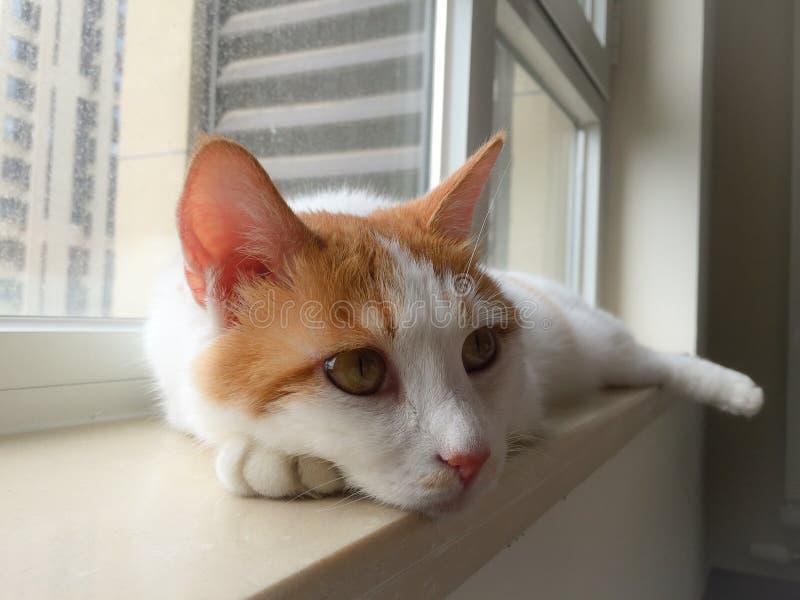 Mi gato del animal doméstico imagenes de archivo