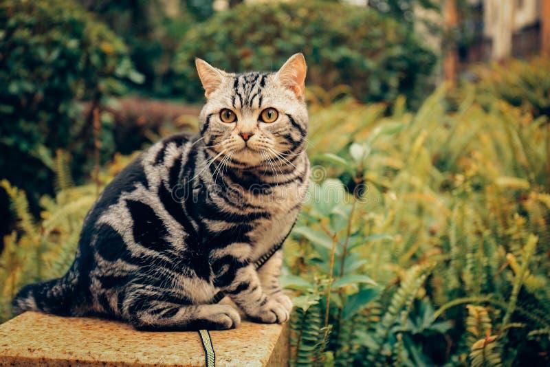 Mi gato, Levi foto de archivo libre de regalías