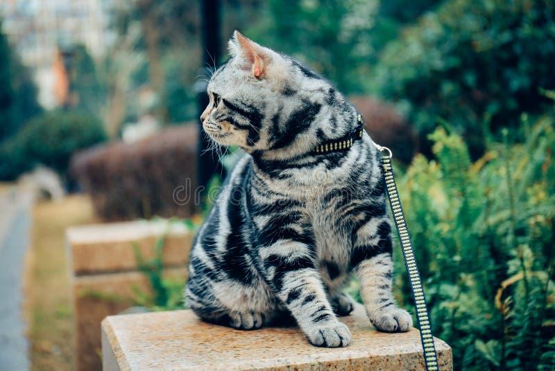 Mi gato, Levi imagen de archivo libre de regalías
