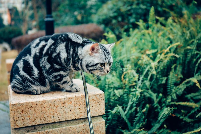 Mi gato, Levi fotografía de archivo