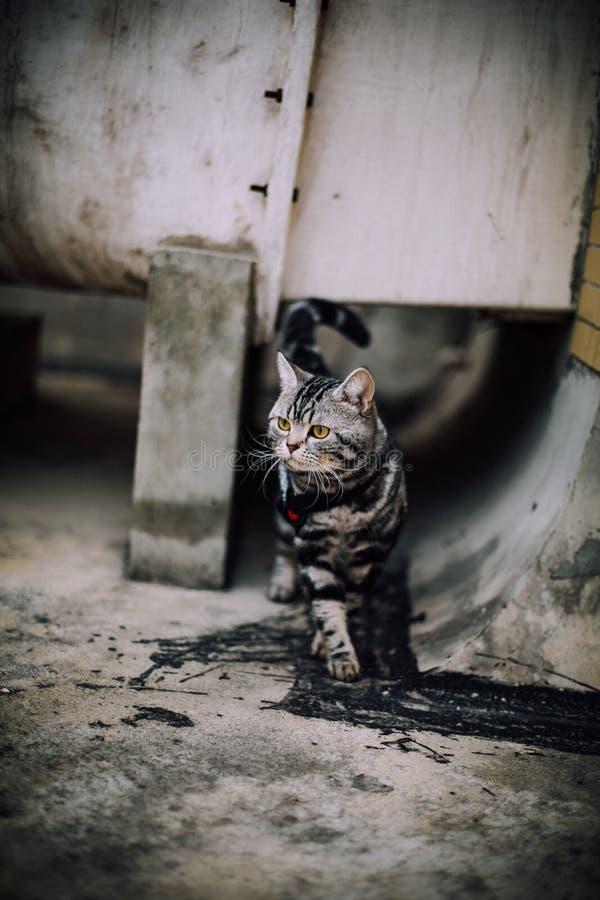 Mi gato, Levi fotografía de archivo libre de regalías