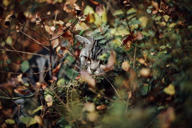 Mi gato, Levi imagen de archivo