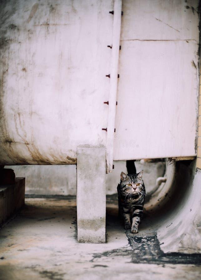 Mi gato, Levi fotos de archivo libres de regalías