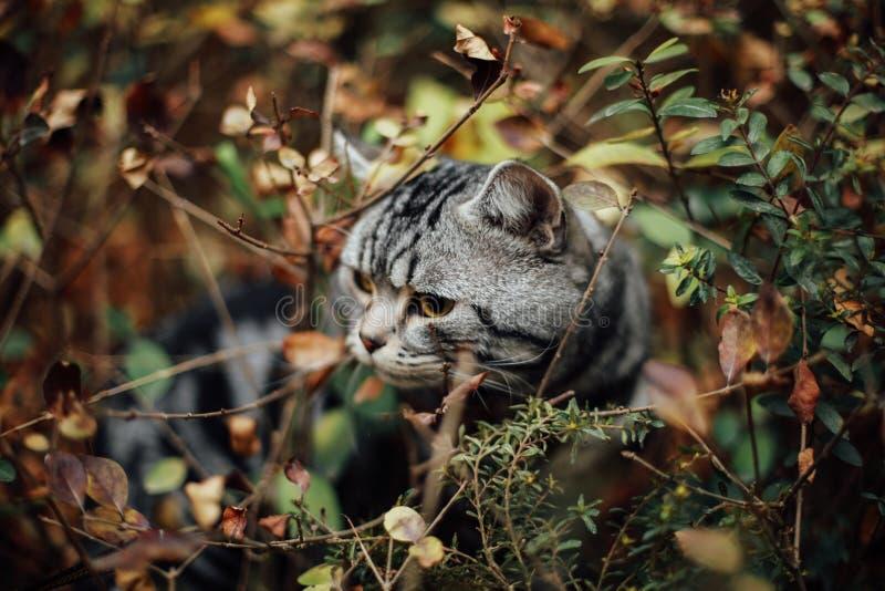 Mi gato, Levi foto de archivo