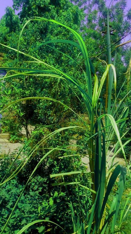 Mi imagen hermosa del jardín de plantas imágenes de archivo libres de regalías
