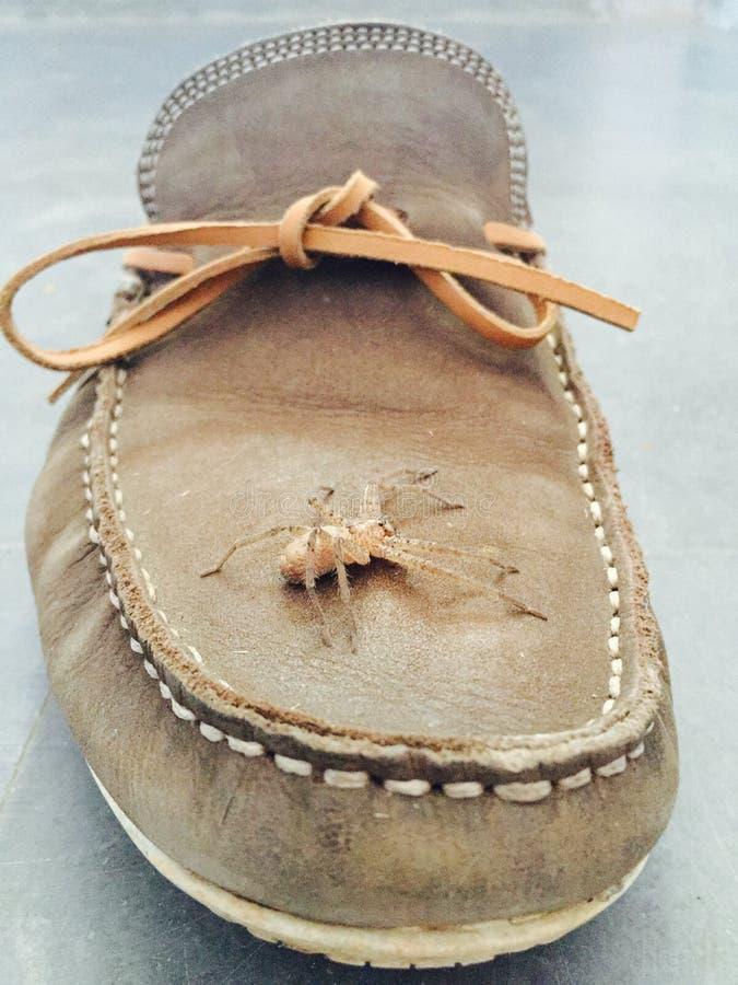 Mi inquilino del zapato fotografía de archivo