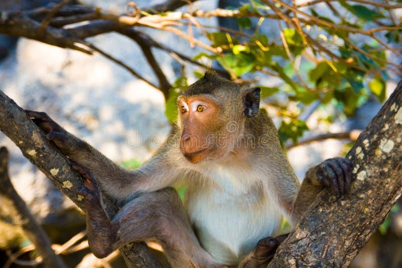 Mi modelo del mono fotografía de archivo libre de regalías