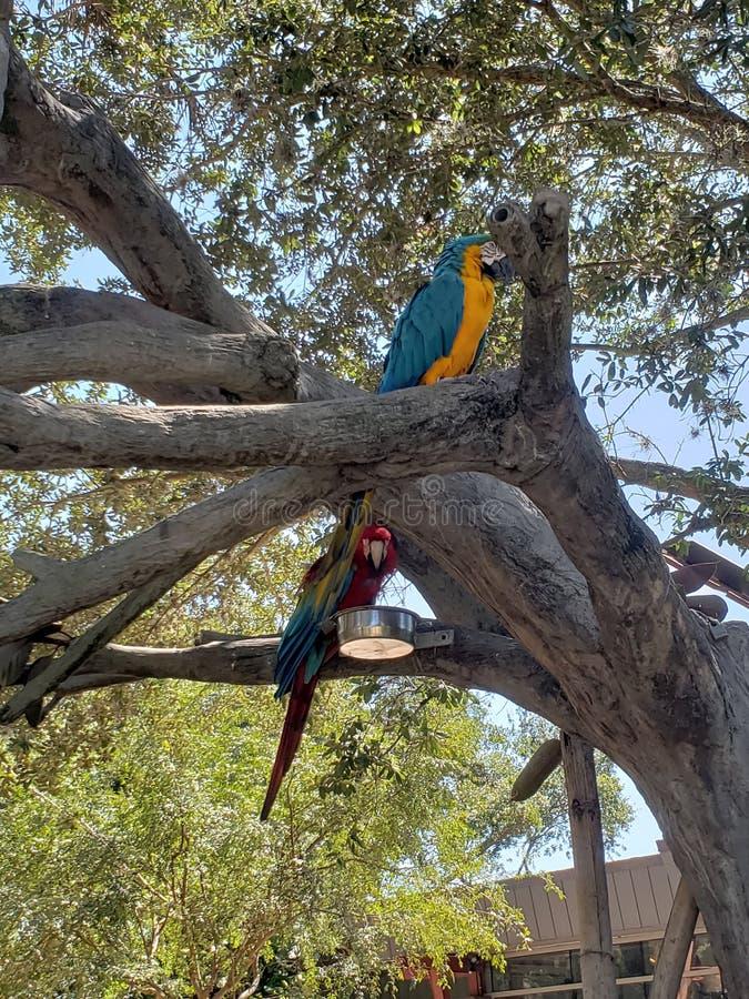 Mi?o?? ptaki i drzewo zdjęcie stock