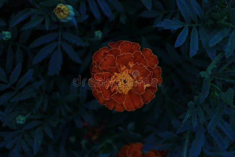 Mi pequeña flor fotos de archivo