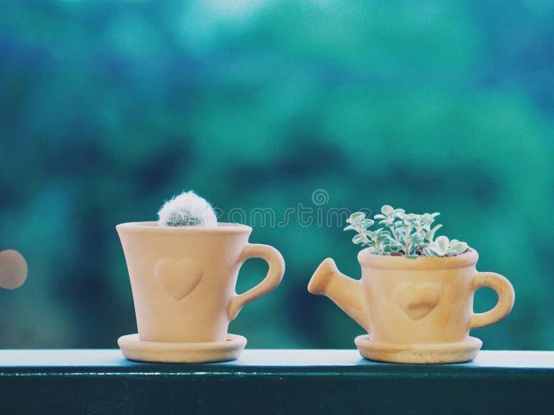 Mi pequeño cactus fotografía de archivo libre de regalías