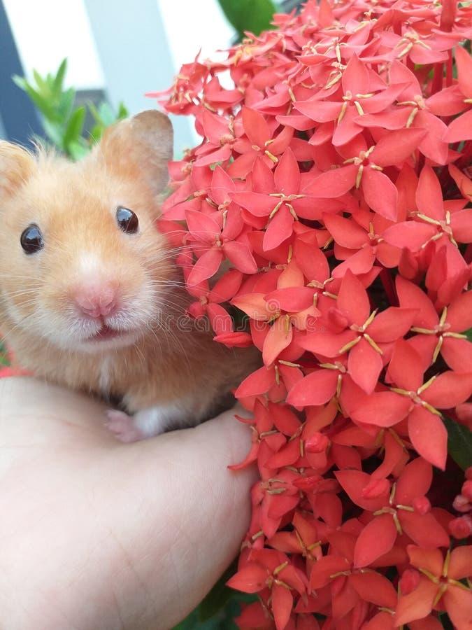 Mi pequeño hámster Flores fotos de archivo libres de regalías
