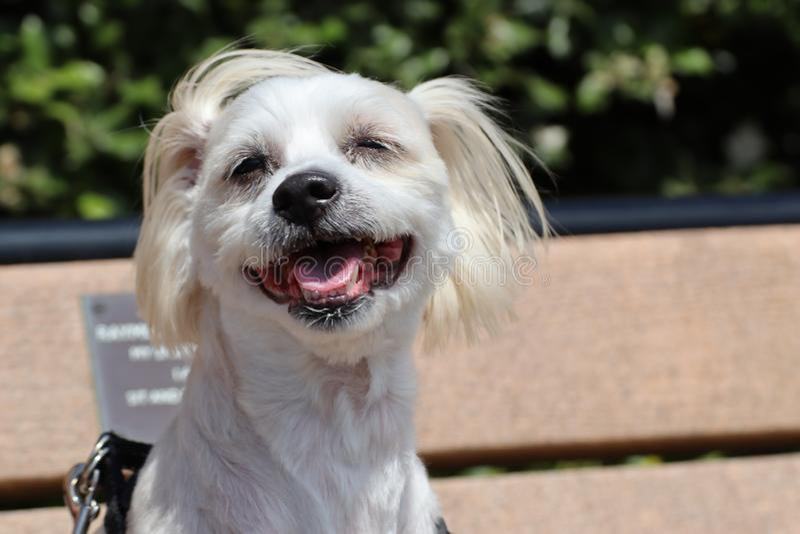 Mi perro en banco imagen de archivo