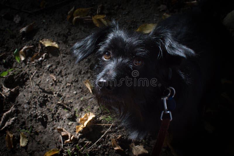 Mi perro máximo fotos de archivo libres de regalías