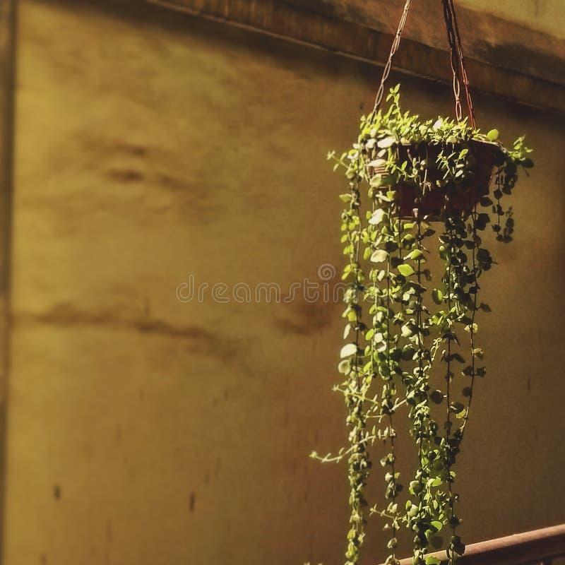 Mi planta de los favoritos de mi jardín imagenes de archivo