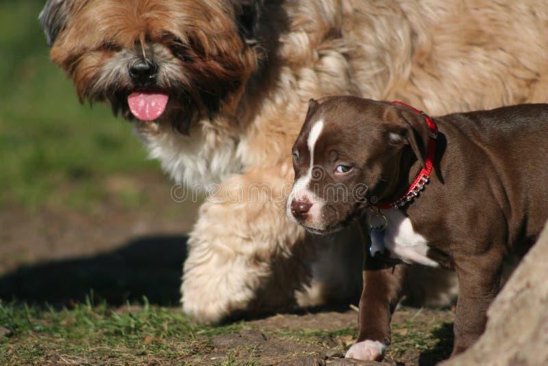 Mi primer día en el parque del perro imagenes de archivo