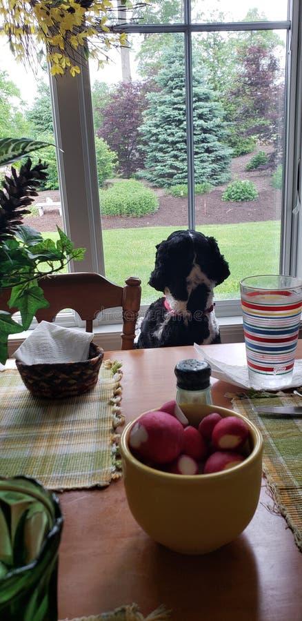 Mi Sammy dulce foto de archivo libre de regalías