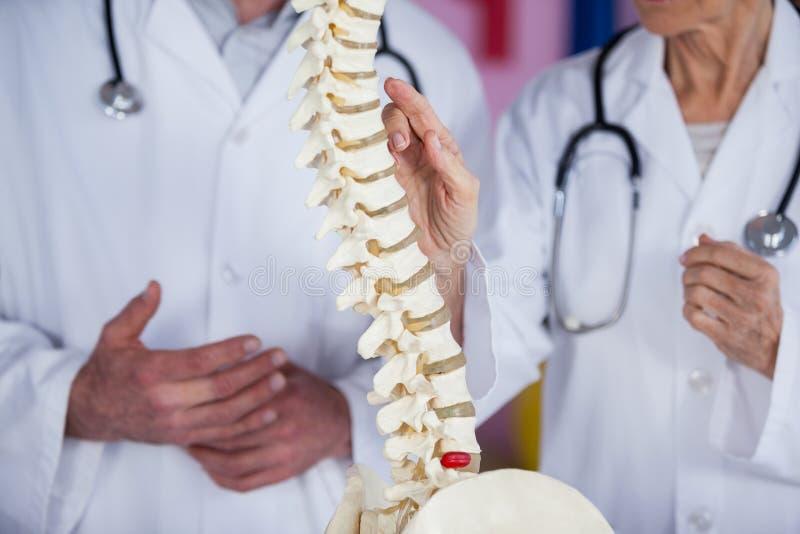 Mi section des physiothérapeutes discutant avec le modèle d'épine photos stock
