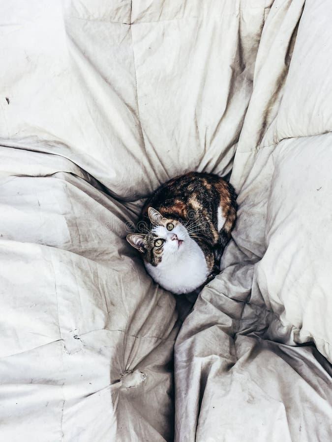 Mia il gatto fotografia stock libera da diritti