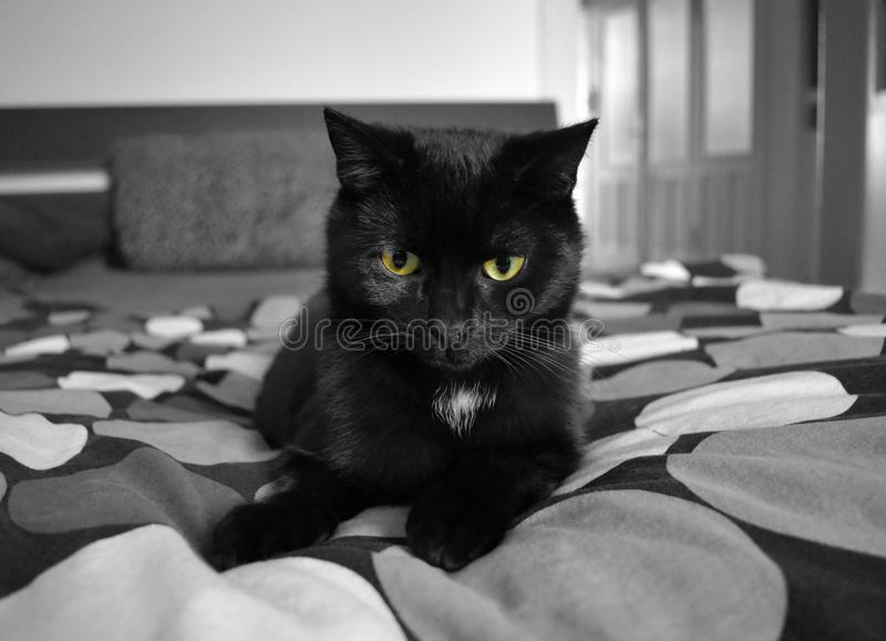 Schwarze Katze auf Bett stock photos