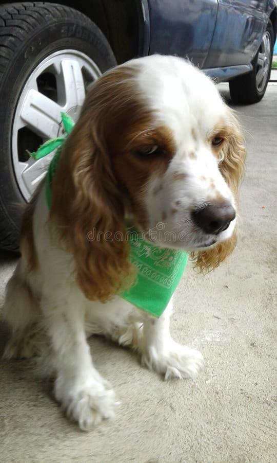 Mia my beautiful doggy photographie stock libre de droits
