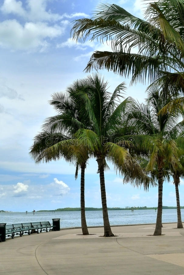 Download Miami stock photo. Image of united, states, bench, waterfront - 25874130