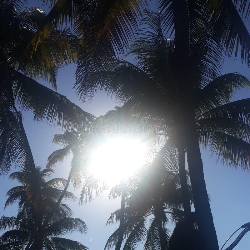 Miami foto de archivo