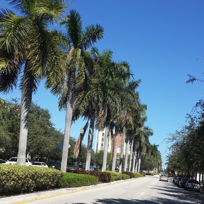 Miami imagen de archivo libre de regalías