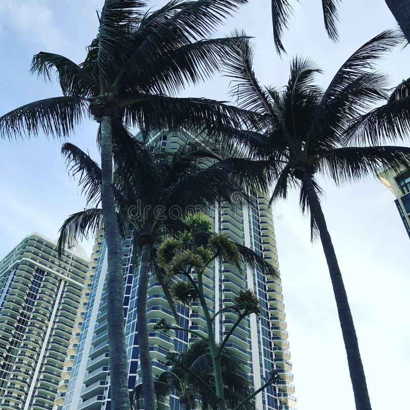 Miami stockfotos