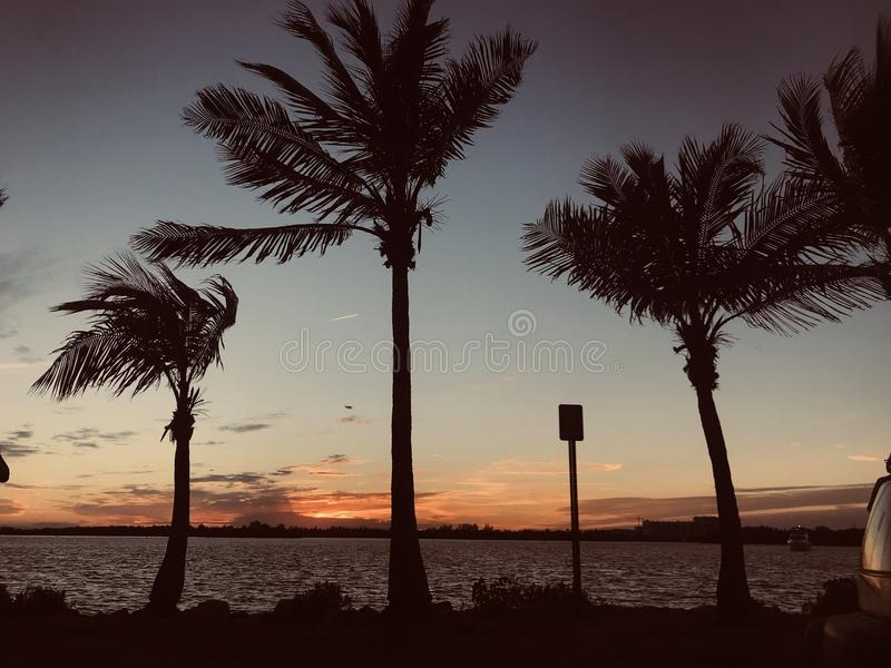 Miami-Ansicht stockbilder
