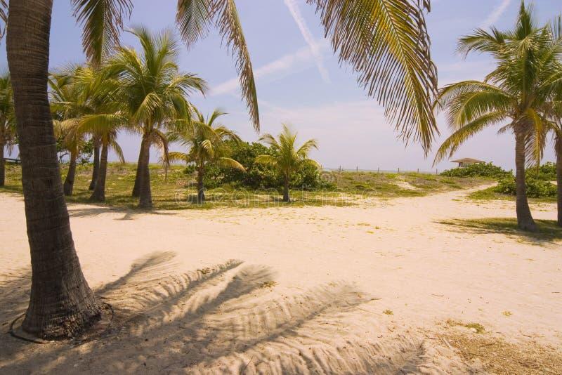 Download Miami beach stock photo. Image of caribbean, scene, miami - 1758934