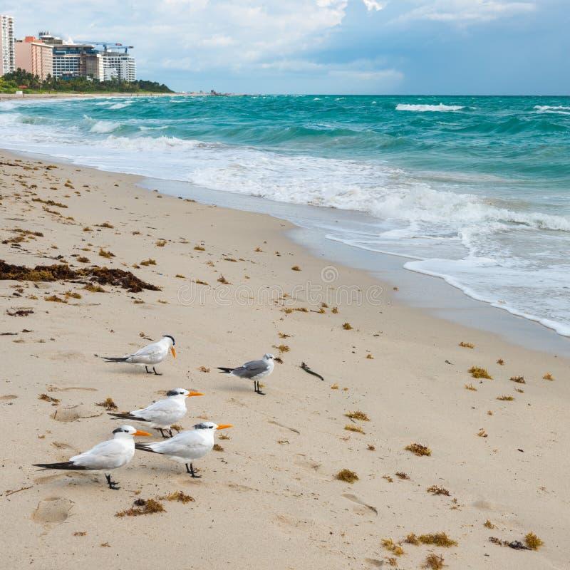 Free Miami Beach. Florida. Stock Photos - 109491823