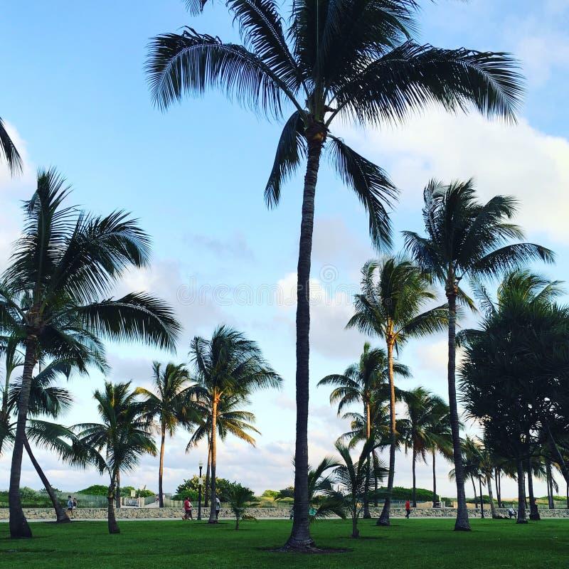 Miami beach - southbeach. Saturday at miami beach royalty free stock photo