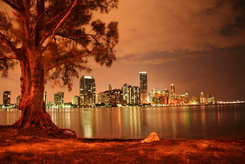Miami bij Nacht stock foto