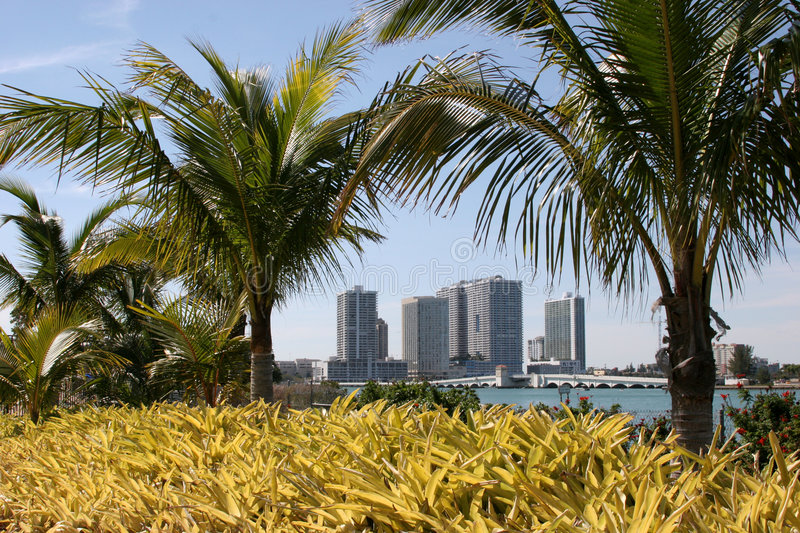 Download Miami Hotels Through Palm Trees Stock Image - Image of tropical, tourist: 105303