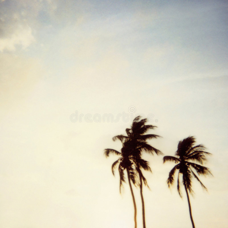 Miami palm tree polaroid stock photos