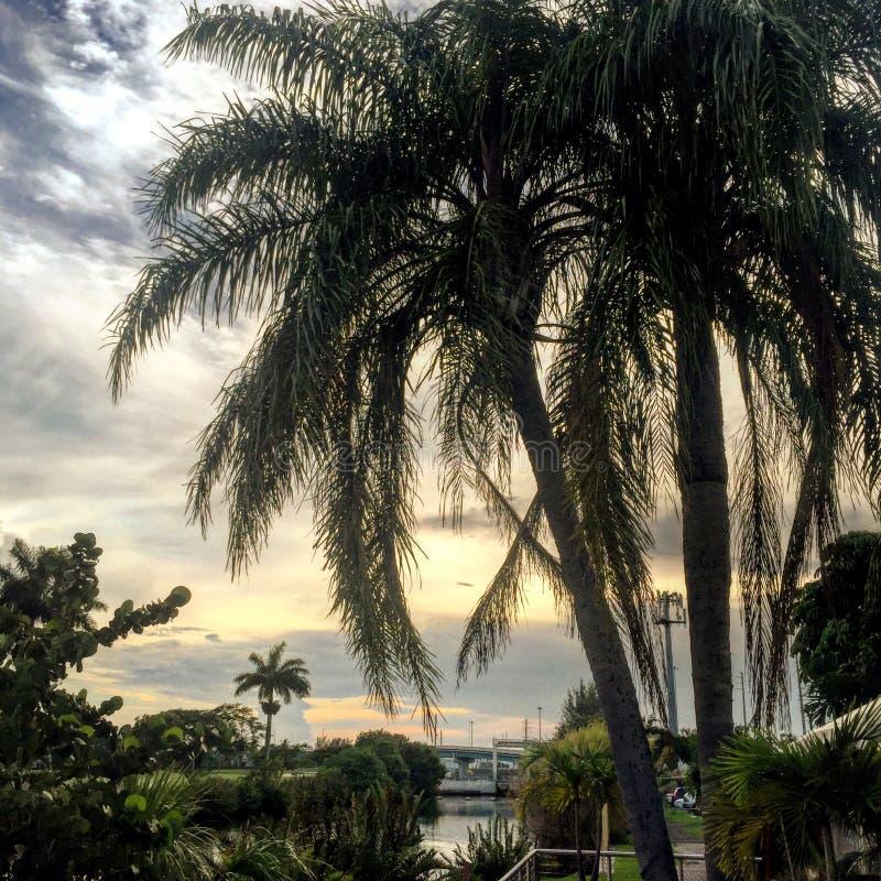 Miami patio stock photos