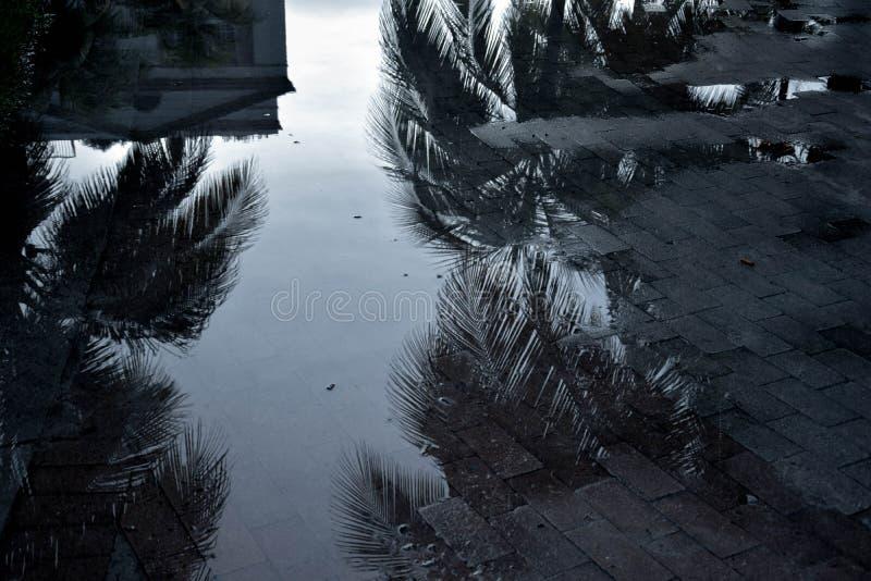Miami reflections. Palm reflection in south beach, Miami stock photo