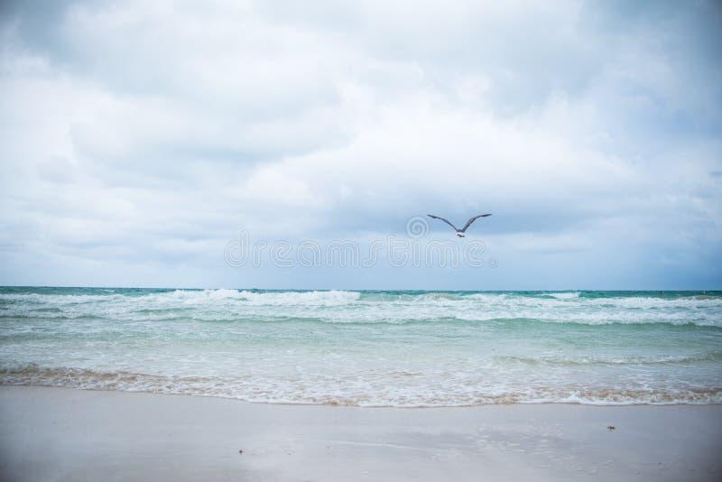 Miami södra strandlandskap arkivfoto