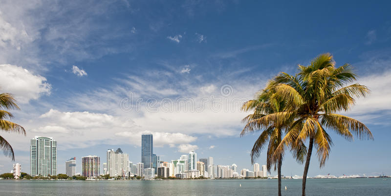 Download Miami skyline and palms stock image. Image of palm, travel - 13350649