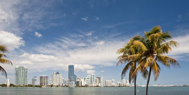 Miami-Skyline und Palmen lizenzfreie stockbilder