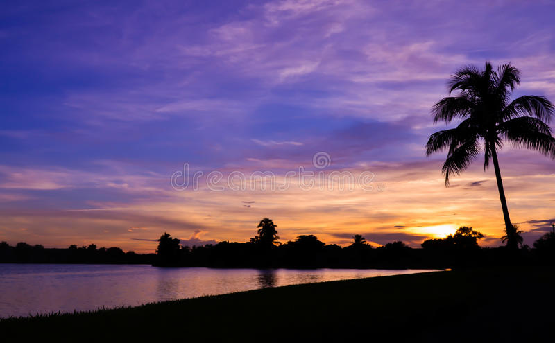 Miami Sunset in Palm Tree Silhouette royalty free stock photos
