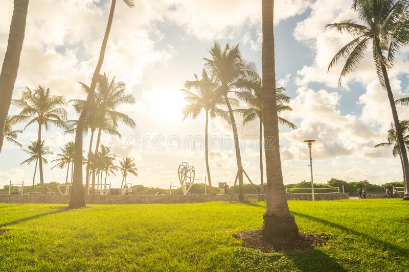 Miami, USA - September 09.09.2019: Morning in Miami south beach. Palm trees with sunlight on background. USA royalty free stock photography