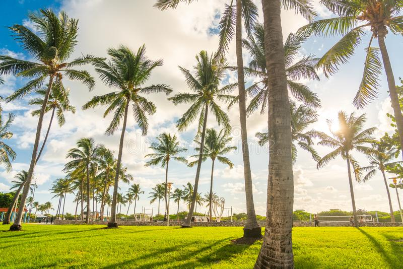 Miami, USA - September 09.09.2019: Morning in Miami south beach. Palm trees with sunlight on background. USA royalty free stock photo
