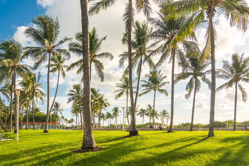 Miami, USA - September 09.09.2019: Morning in Miami south beach. Palm trees with sunlight on background. USA royalty free stock images